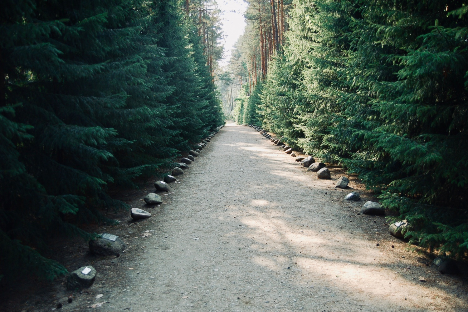 The Road to Heaven at the Sobibór death camp in Poland, a tree lined dirt roads leading to the camp and the victims' deaths.