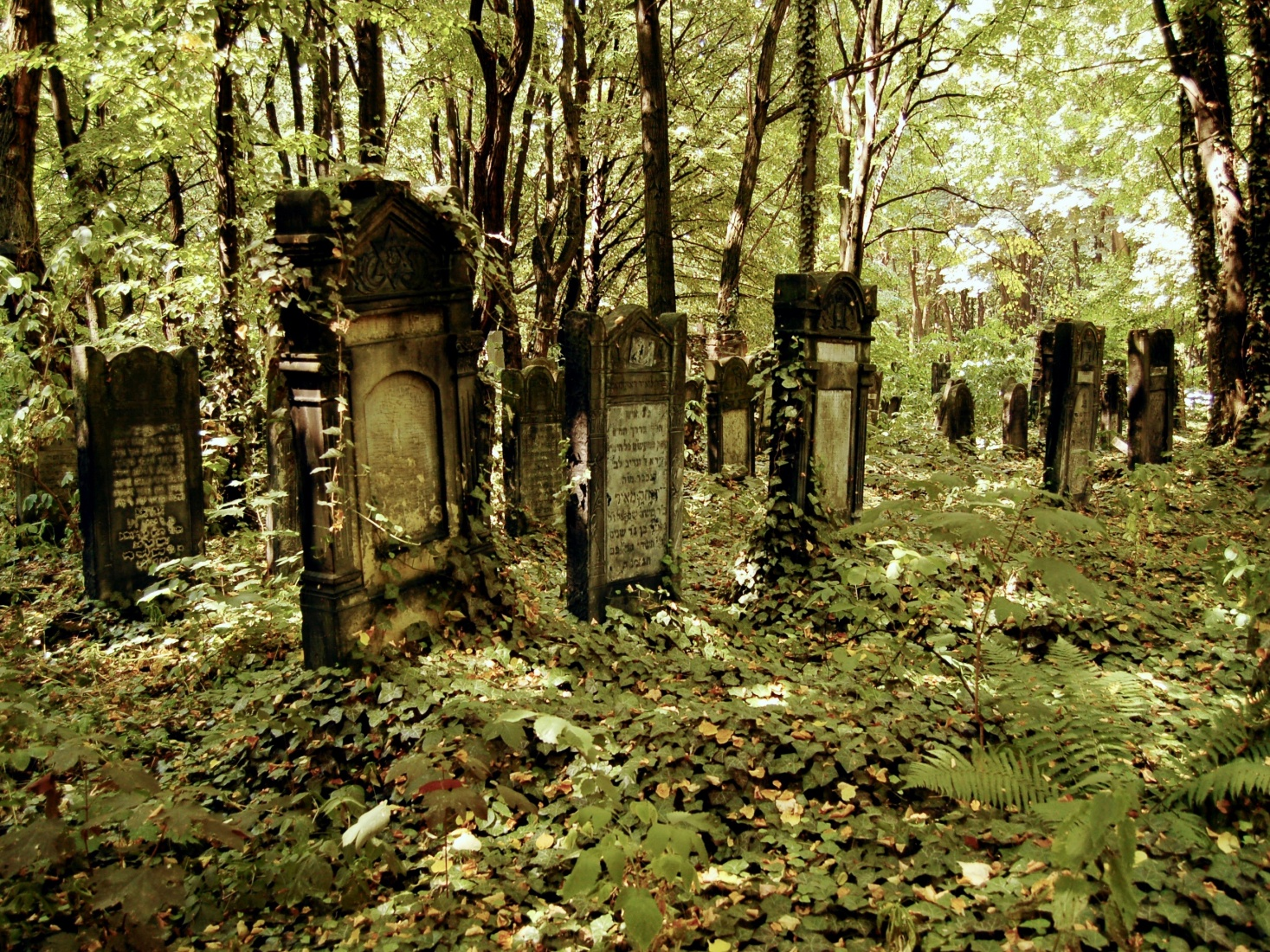The enormous Jewish cemetery in Łódź, Poland, with many rows of untended graves left after World War II.