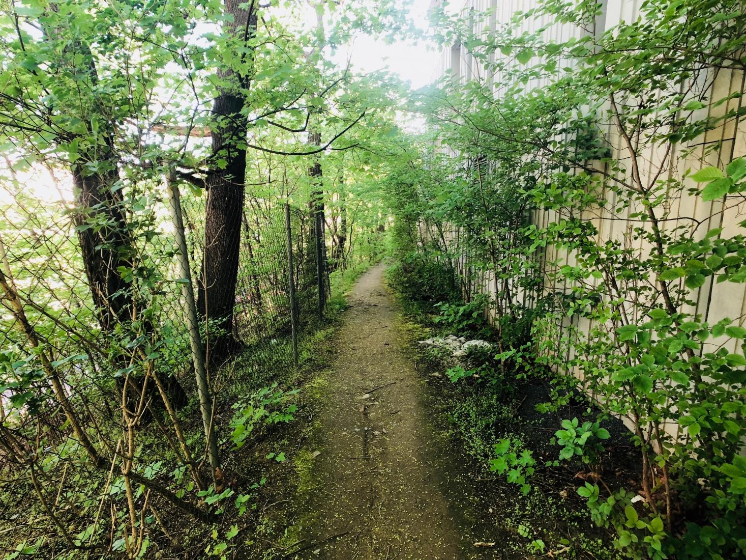 Woods and path near Russian housing complex at K Starému Bubenči street, Prague, Bubeneč, walking distance from Siberia Square, Sibiřské náměstí.