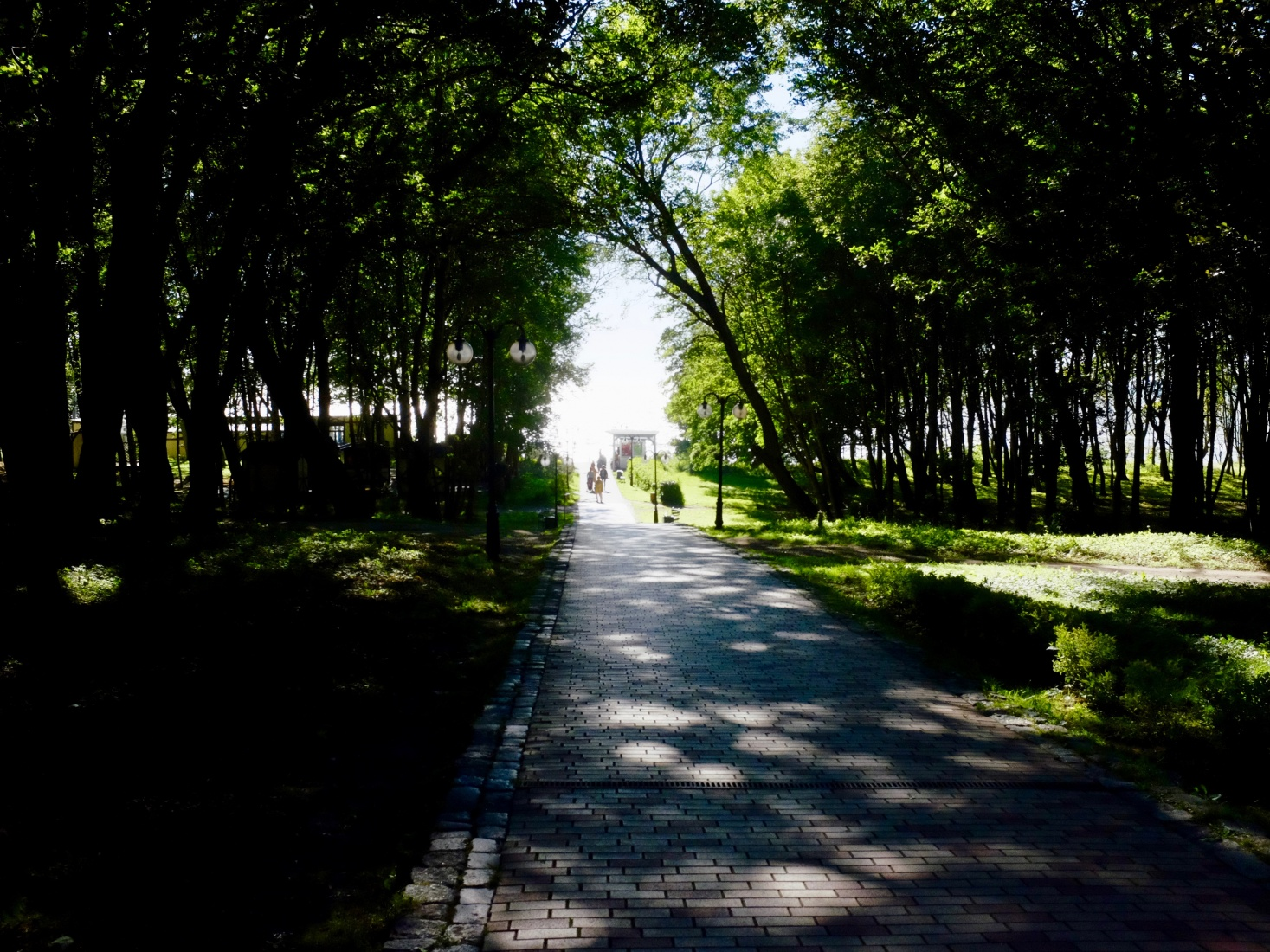 Tree lined pathway leading to the beach in Becker Park, Yantarny, outside Kaliningrad, Russia.