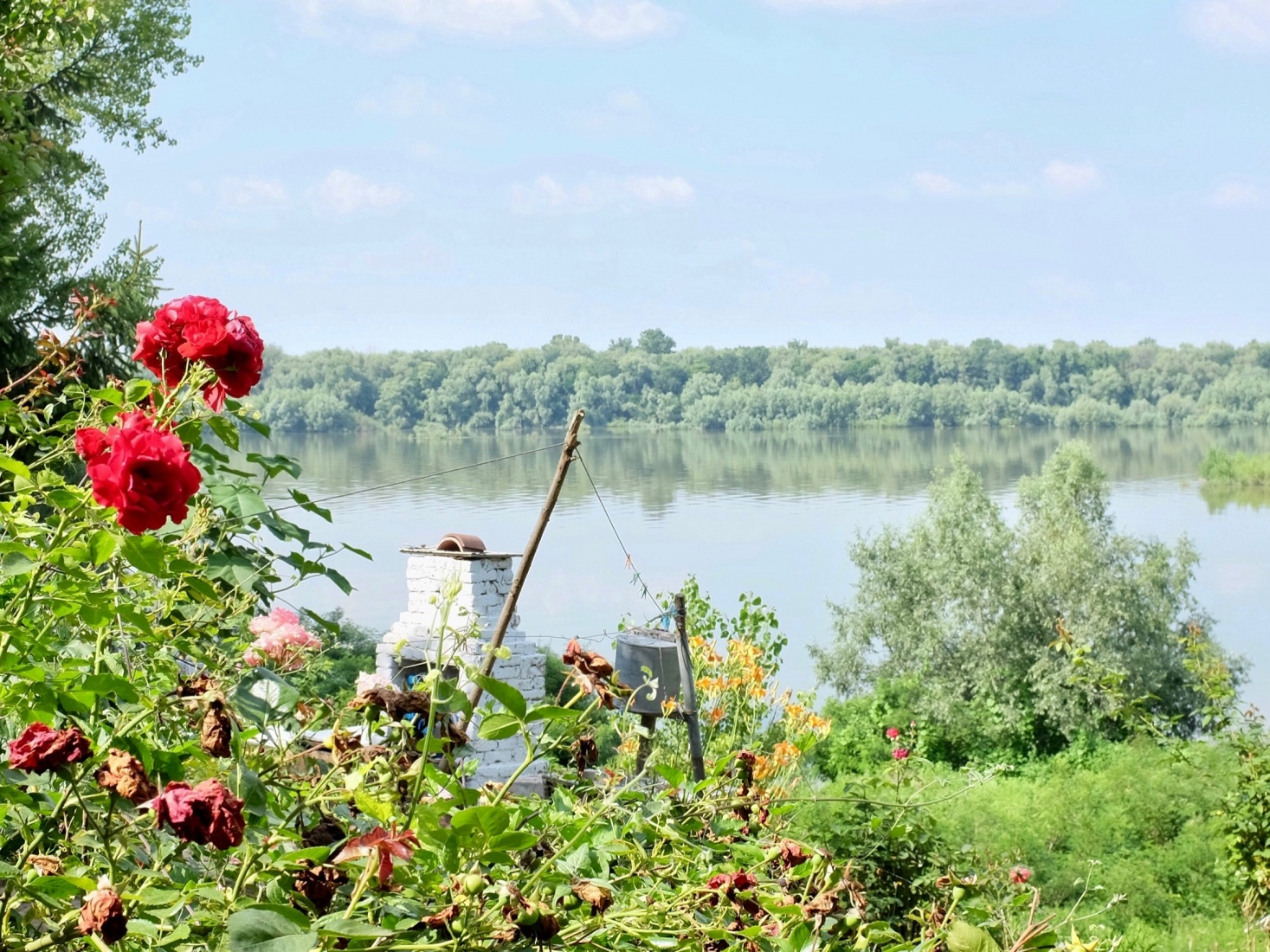 Beautiful greenery by a placid part of the Danube that runs past the Bulgarian town of Srebarna.